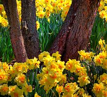 Coming Up Yellow by John Absher
