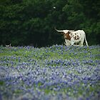 Longhorn in Blue by Pilot Graphics Photography