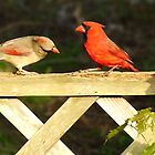 Royal Couple - The Cardinals by Margie Avellino