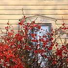 Spring at an abandoned home by Robert Kelch, M.D.