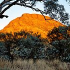 Morning Light on Mount Nameless by Paul Mayall