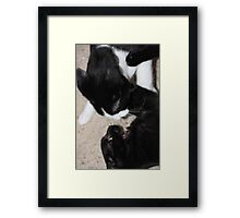 """""""KITTIE PLAY"""" Framed Print"""