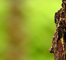 Living bark by Jeremy Cusack