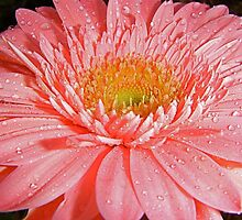 Catching Rain Drops. by Gabrielle  Hope