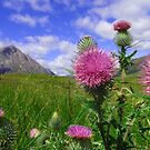 Scotch Thistle by Nik Jowsey