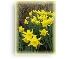 Easter Daffodils Vignette Canvas Print