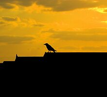 When the crow rests..... by wigs