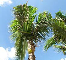 Palms by broerse1