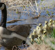 Mother Goose by Ken McElroy