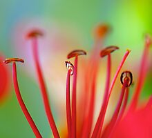 Red Stamens by Renee Hubbard Fine Art Photography