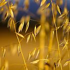the seed is gone, the gold remains... by Allan  Erickson