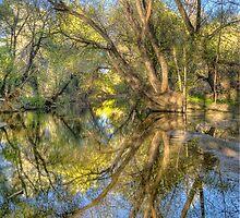 Mirror Mirror by Bob Larson