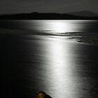 Night Heron by Stephen Kane