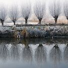 willow mirror by filipmije