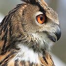 Eurasian Eagle-owl by DutchLumix