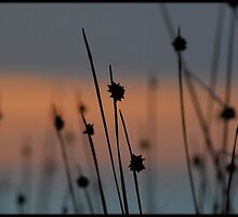 Within the Reeds 4 by kelliejane