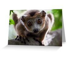 looking and learning Greeting Card