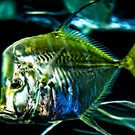 Hatchet Fish by Deri Dority