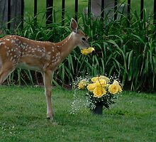Time to stop and smell the Roses by creativegenious