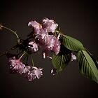Fleur sur Branche by G. Patrick Colvin