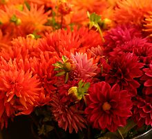 Red mums in the market by Carlanne McCrystal