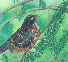 Little Robin by Katherine Thomas