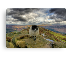 """King Of The Hill"" Canvas Print"