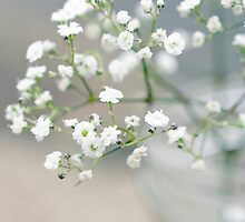 Baby's breath by LGodbey