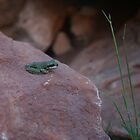 Frog on Rock by Howza