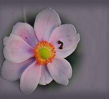 Embossed Flower by JaninesWorld