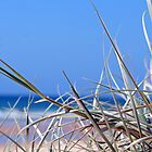 Beach Grass by dentalphotoart