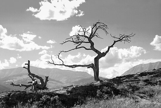 """""""Withered Tree"""" by Chad Kruger 