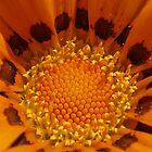 Orange Heart by Dan Bish