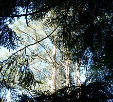 Trees through trees by Ken Gibson