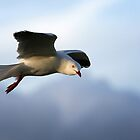 Seagull Soaring by Graham Jones