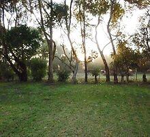 Sunrise through the Mist on Stokes' Farm - Kirkstall, Vic by EdsMum