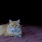 Ginger Cat by TeAnne