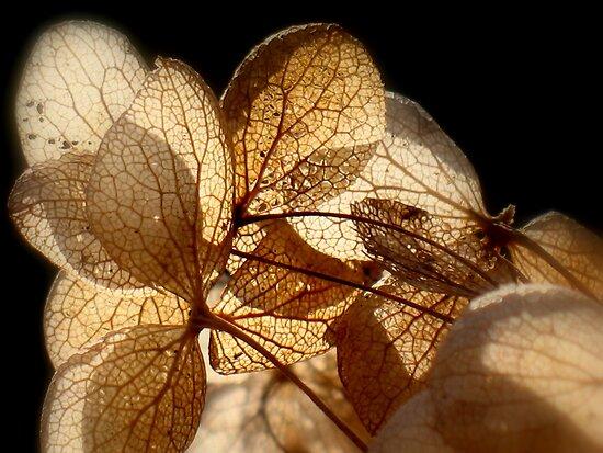 Fairy Wings - JUSTART ©  by JUSTART