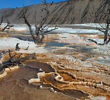 Mammoth Hot Springs - Yellowstone by Stephen Vecchiotti