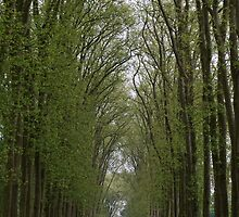 Tall Trees in the Gardens of the Palace of Versailles by Laura Sanders