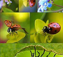 Ladybird Season by missmoneypenny