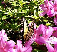 Sweet Nectar by DDLeach