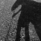 horse shadow 3 by Fleur Stelling