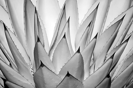 Spikes 2 - infrared by Hans Kawitzki