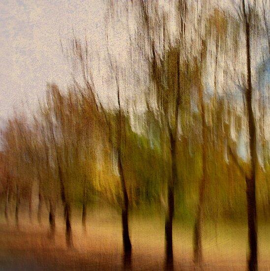 Shades of Autumn by Kitsmumma