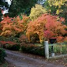 Autumn in Daylesford by Fiona Kersey