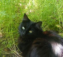 Black cat in grass by Taylor Cook