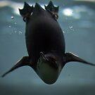 Diving Penguin by Samuel Gundry