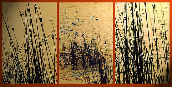 Water Grasses Montage by Chris Armytage™