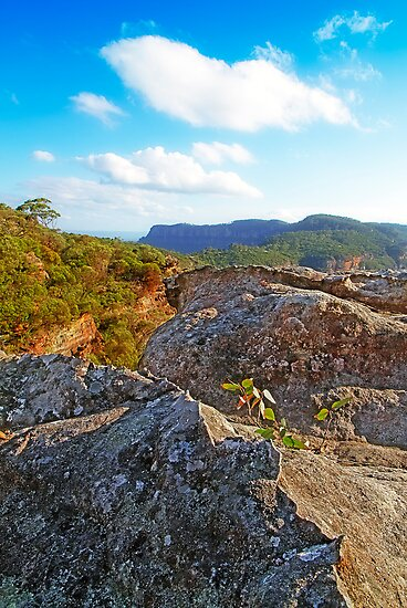 Tree on a Rock, Narrowneck, Katoomba by JoshuaStanley